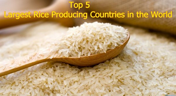Top 5 Largest Rice Producing Countries in the World 2018