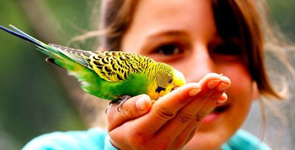 Top 5 Most Expensive Pet Birds in the World